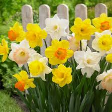 when does home depot spring black friday end garden club the home depot garden club the home depot