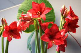 forcing flower bulbs experiment flower bulb