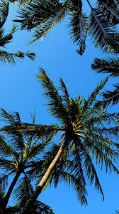 Cool Tree by Palm Trees Cool Samsung Galaxy S7 Wallpaper