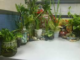 cubicle plants cubicle diy home plans database