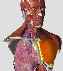 Anatomy Videos Free Download Essential Anatomy 5 U2013 3d4medical