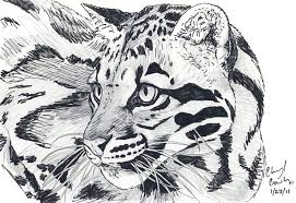 clouded leopard by silvercrossfox on deviantart