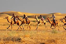 thar desert animals camel safari at dera dune retreat jamba rajasthan thar desert