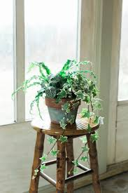 1709 best container gardens images on pinterest garden container