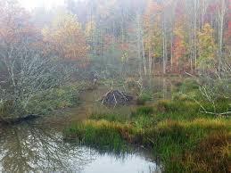 how are wetlands formed wetlands u s national park service