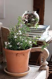Fragrant Potted Plants - fragrant houseplants in the garden