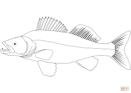 forum guestbook shotclip lolibaby walleye drawing at getdrawings com free for personal use walleye