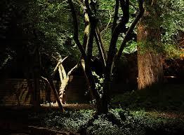 Tree Lights Landscape Landscape Lighting For Trees Durable Led Lights For The Outdoors