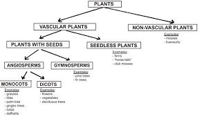 classifications of flowering and non flowering plants
