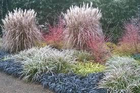 Anglesey Abbey Winter Garden - winter gardens to wow rhs gardening