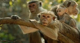 5 reasons to see disneynature u0027s monkey kingdom monkeykingdomevent