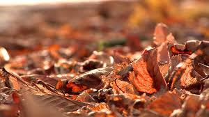 autumn leaves 1 free stock video footage youtube