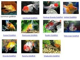 common egg layers in aquarium