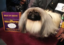 westminster show 2016 best in show