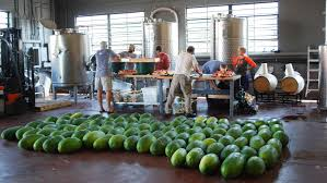 history of the watermelon saving the sweetest watermelon the south has ever known the salt