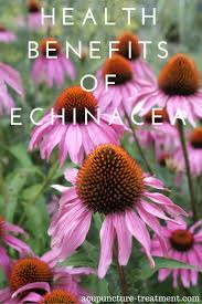 native chinese plants 76 best flowers coneflower echinacea images on pinterest