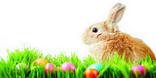 bunny easter the easter bunny s favorite breakfast recipe aspen clinic