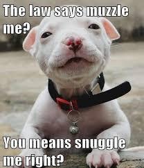 Law Dog Meme - the best pitbull dog memes memedroid