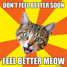 Feel Better Meme - don t feel better soon cat meme cat planet cat planet