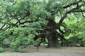 What Is Dead Tissue Called How Much Of A Tree Is Living Tissue