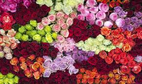 Meaning Of Color by 14 Rose Color Meanings What Do The Colors Of Roses Mean For