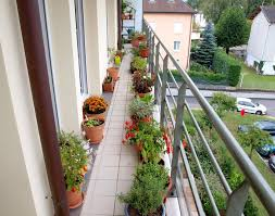 apartment balcony plants christmas ideas best image libraries