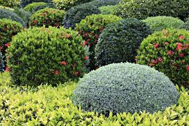 Different Types Of Garden - precious garden bushes modest ideas a guide to different types of
