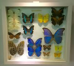 growing more butterflies in south east queensland gecko hills to mauritian life u2013 page 2 u2013 man in mauritius