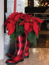20 ways to decorate with poinsettias for the holidays hgtv s