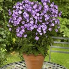 Fragrant Potted Plants - 534 best the garden i want images on pinterest flowers garden