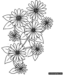 daisy flower coloring pages wallpaper download cucumberpress com