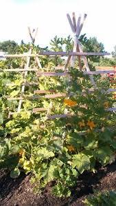 Vertical Garden Trellis - beautiful vertical gardening trellis garden zen u0026 chi