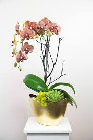 Arrangments by Arrangements Lee U0027s Orchids