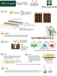 Fall Vegetable Garden Ideas by Best 25 How To Plant Garlic Ideas On Pinterest Planting Garlic