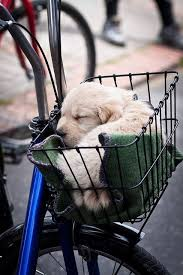 cute basket buddies wallpapers 99 best puppies in baskets images on pinterest cat basket