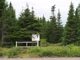 gc14h7v newfie tree traditional cache in newfoundland