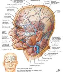 3d Human Anatomy Atlas Human Anatomy Netter Anatomy Any One Human Could Do All These