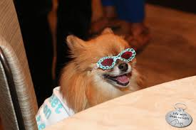 Dogs At Dinner Table Barkworld Highlights Tuna Sophia Gus Shorty U0026 More Life With