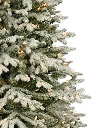 frosted christmas tree frosted fraser fir christmas tree balsam hill australia
