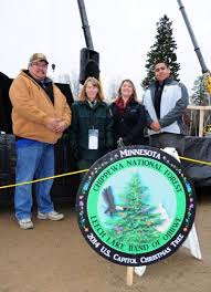 harvested in chippewa national forest capitol christmas tree