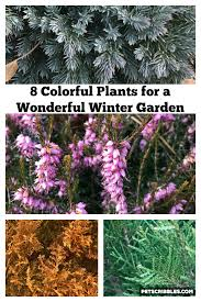colorful plants for a wonderful winter garden png
