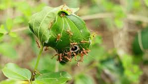 for safer cheaper pest control just add ants mnn mother