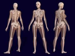 Female Breast Anatomy And Physiology Best 25 Human Anatomy Female Ideas On Pinterest Anatomy