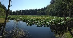 Wetland Resources Of Washington State by 15 Nw Washington Hikes That Are 3 Miles Long Or Less U2013 Northwest