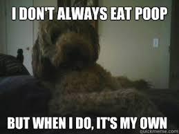 Funny Dos Equis Memes - dos equis dog memes quickmeme