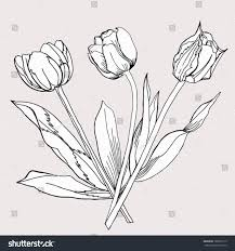 bouquet tulip sketch black white vector stock vector 166509119