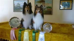 belgian sheepdog club of america national specialty odtc photos