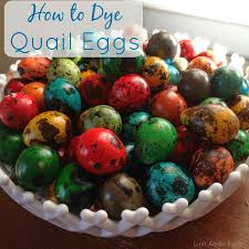 linn acres farm how to dye quail eggs