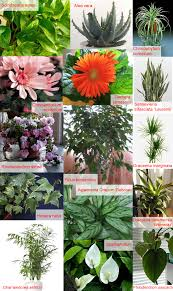 best plants for air quality plants flowers indoor plants create clean air