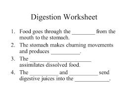 12 best images of digestive enzyme worksheet digestive enzymes